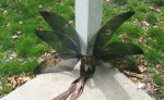 Ninja Wings