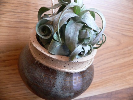 Smokey Brown Hanging Wall Pot - $15