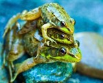 Leap Frog Mini Print - $4