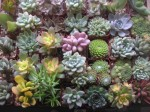 Succulent Plants Set of 12 - $36